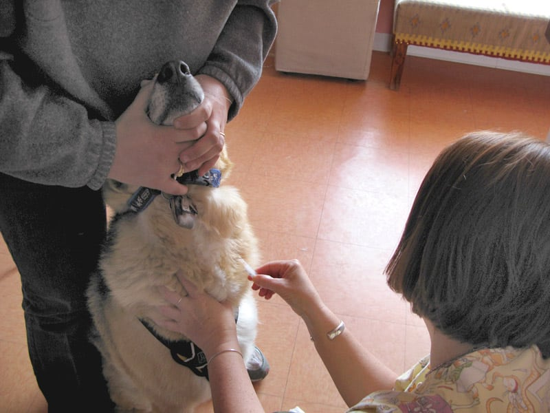 Dog blood test for chemotherapy complications