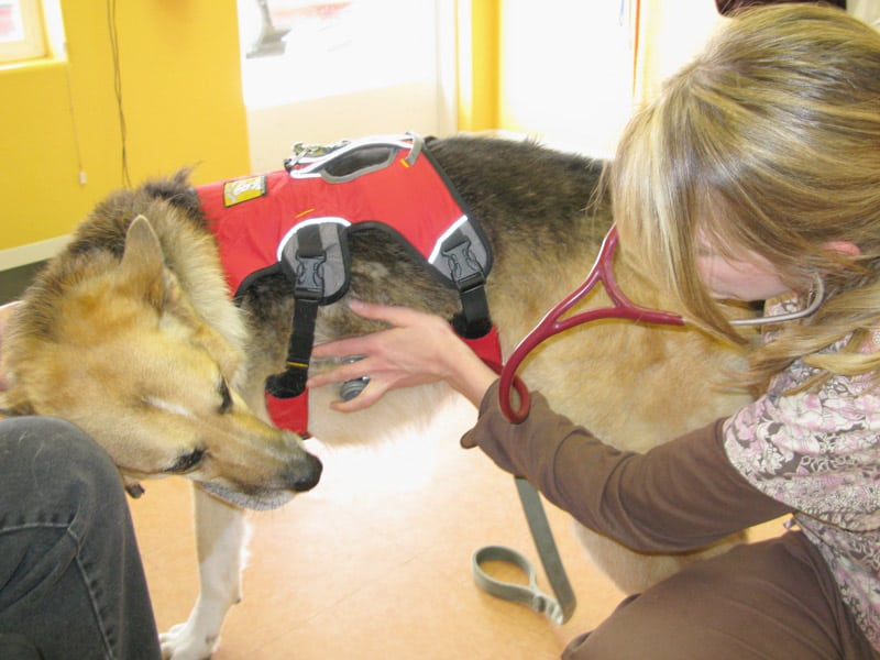 Jerry Visits the Veterinary Cancer Care clinic in Santa Fe