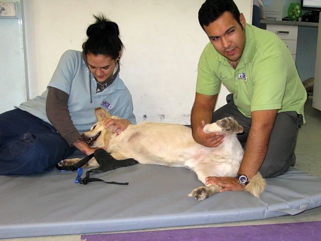 Rehab Therapy for  for Lobo at CARE