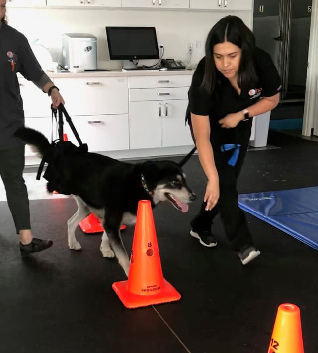 Tripawd Exercise Therapy