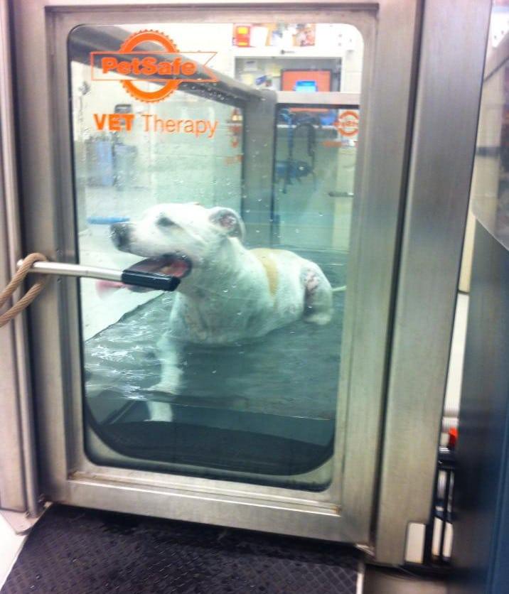 Flash Hydrotherapy Three legged Dog rehab
