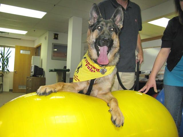 Wyatt Trains on FitPAWS Dog Conditioning Peanut