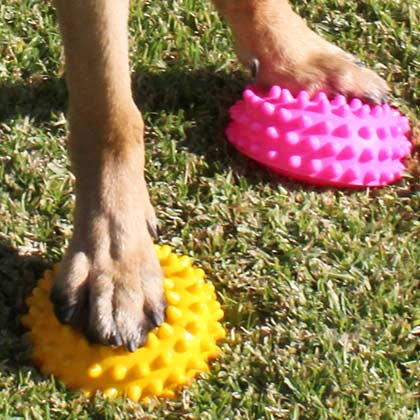 fitpaws paw pods