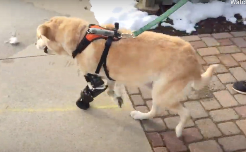 pet prosthetics worth it?