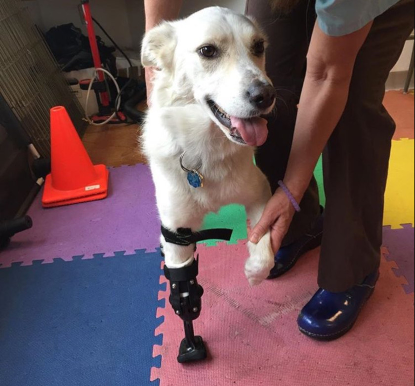dog prosthetics worth it?