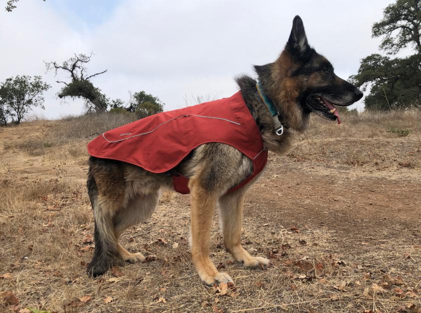 Best Tripawd winter dog jacket