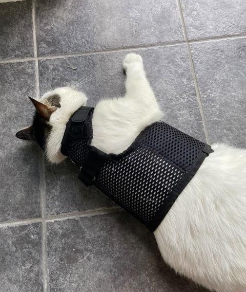 Quiggle Tests Sleepypod Martingale Cat Harness