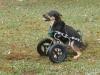 EddiesWheels Forelimb Amputee Dog Wheelchair Front Wheel Cart