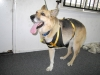 Dog Seatbelt Harness from Watsons Pet Products