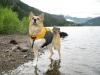 K9 Float Coat Dog Life Preserver