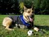 Rocco models Ruff Wear dog coat and boots