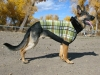 Wyatt models Premier Fido Fleece dog sweater