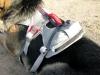 Ruff Wear Doubleback Dog Climbing Harness