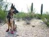 Ruff Wear Dog Boots Protect Wyatt from Desert Cactus