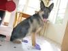 Pawz reusable disposable non-skid dog boots