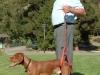 Arnie Demonstrates the Bottom\'s Up Leash for Senior Dogs