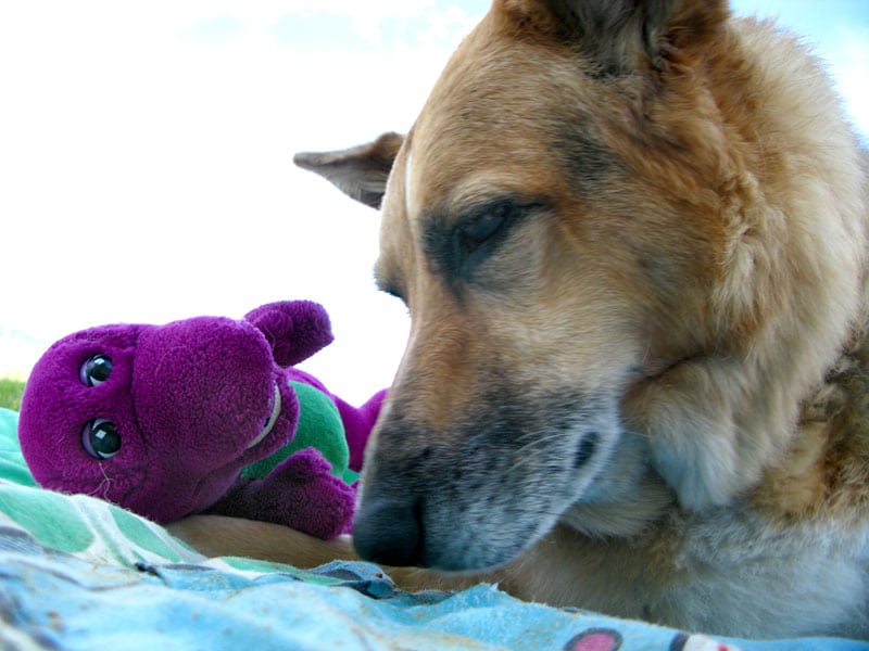 Jerry says goodbye to Barney