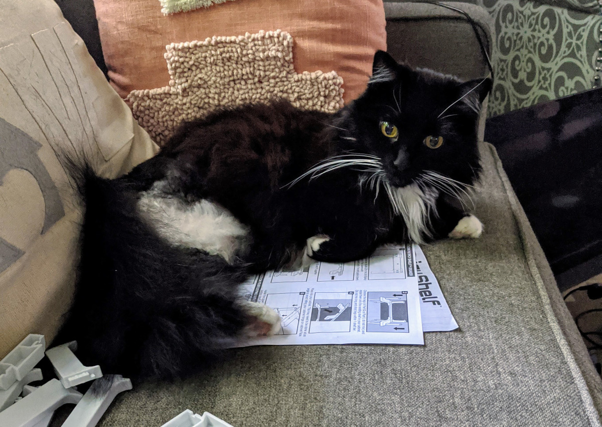 3-legged cat remaining leg injury