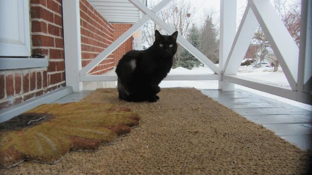 three-legged cat Samson