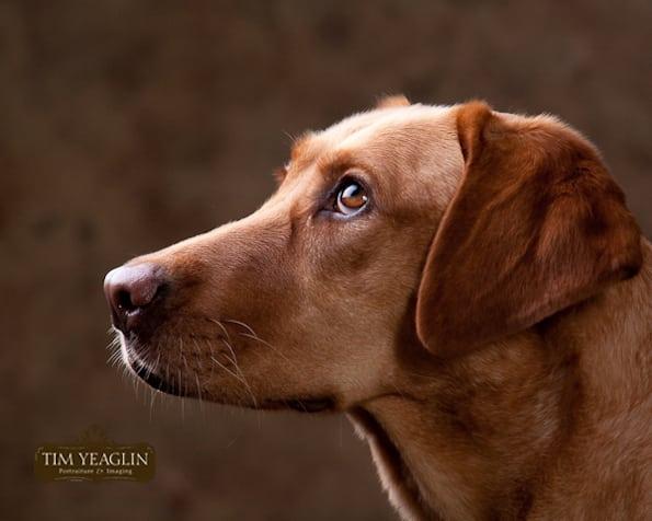 Tripawd, dog, agility