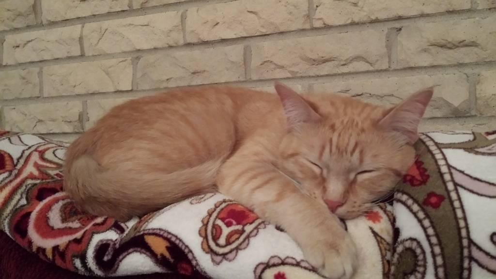 Hiroaki Tripawd Cat