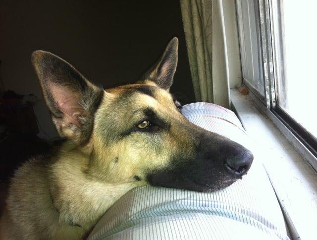 dog bone fungal infection