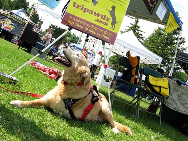 Dakota in Tripawd Booth at Larimer County Pet Expo