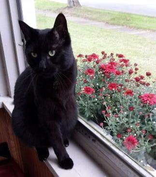 Sebastian, Cat Tripawd