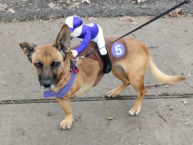 Tripawd Dog Rescue