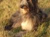 Darcy Deerhound three legged tripod from the United Kingdom