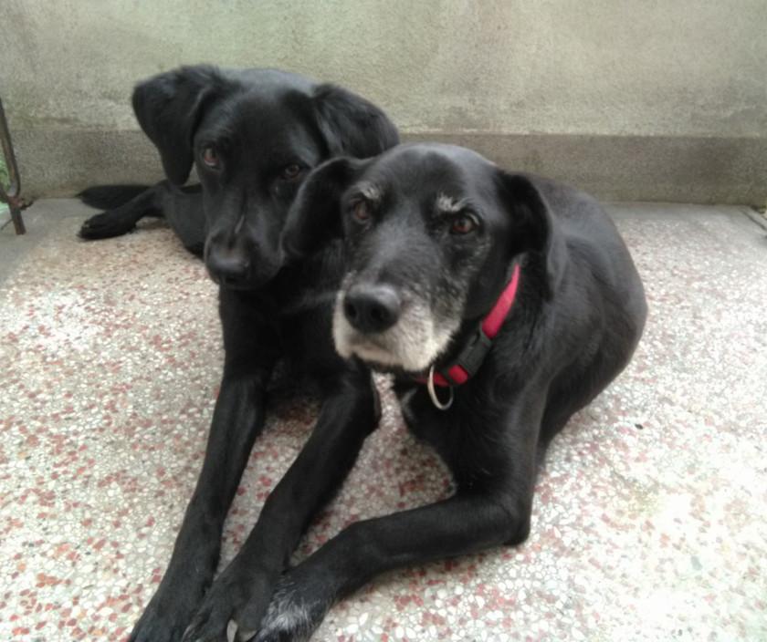 Tripawd dog siblings