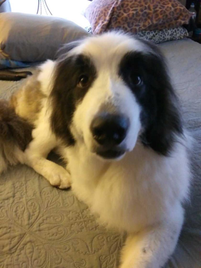 Giuseppe Shrinking Dog Cancer Tumor
