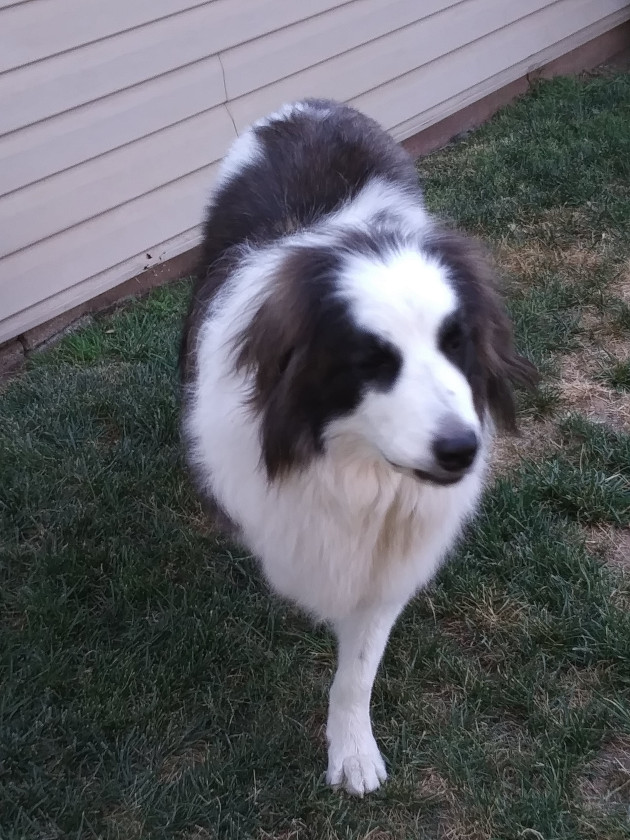 Medicinal Mushrooms Dog Cancer Survivor