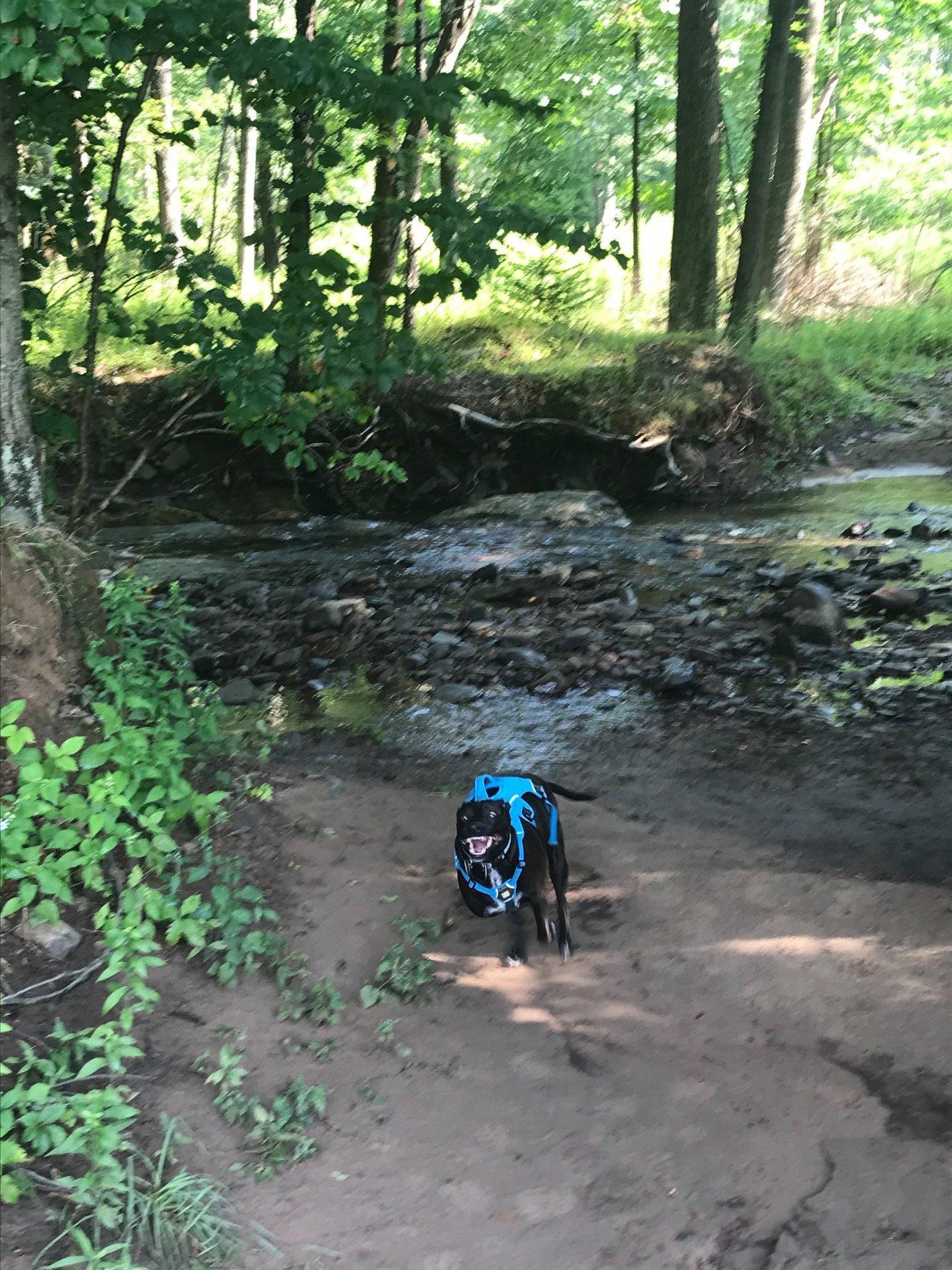 three legged dog swimming