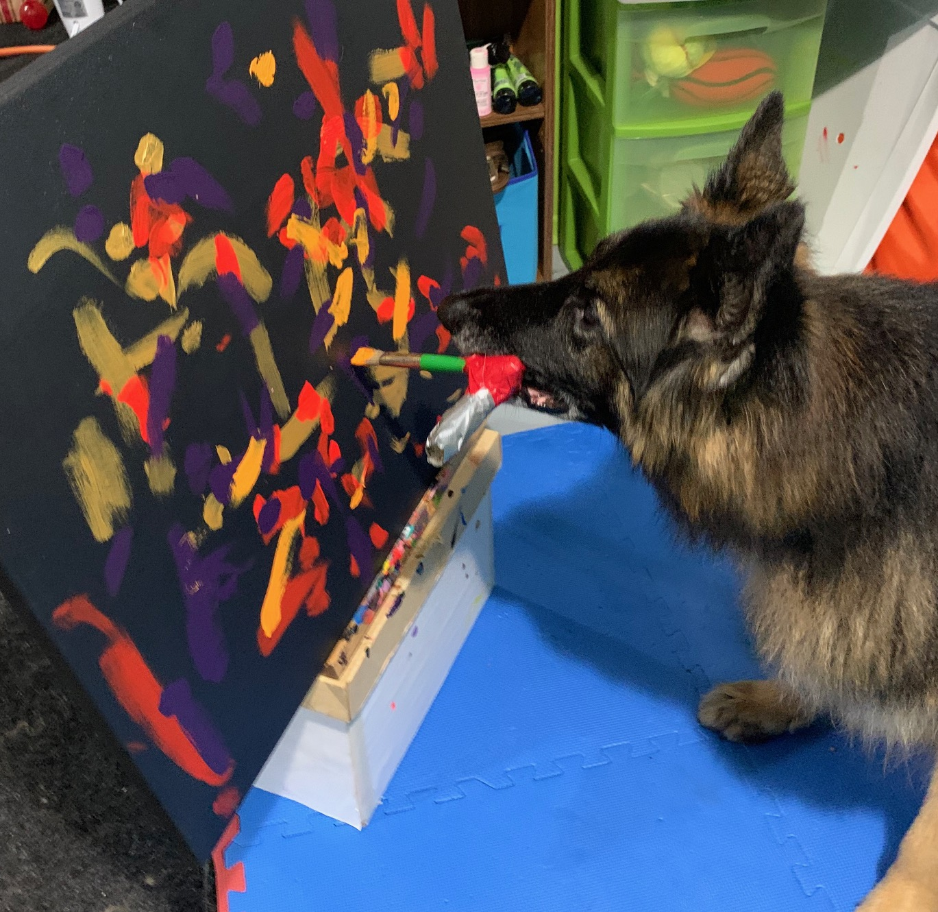 Painting dog helps pets with cancer