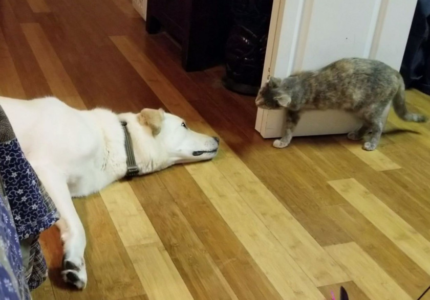 Tripawd Cat and Dog