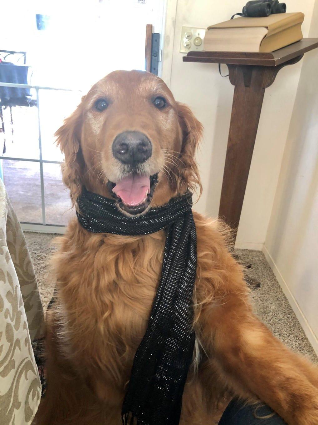 Tripod therapy dog