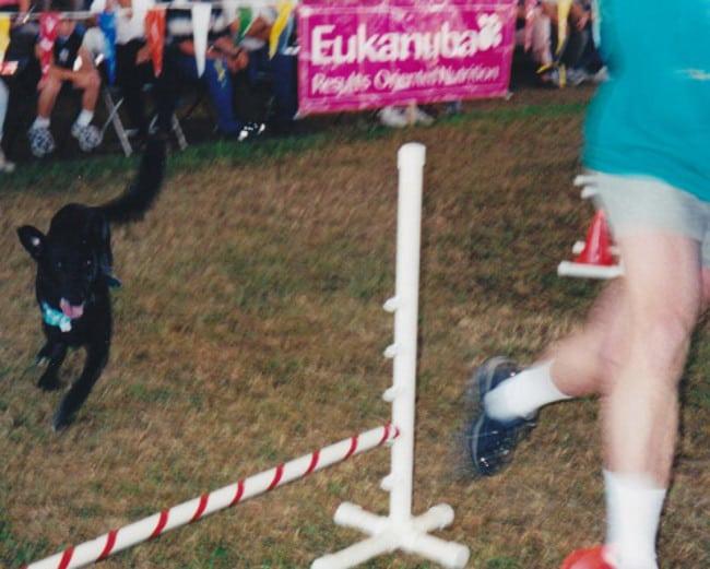 three legged senior dog