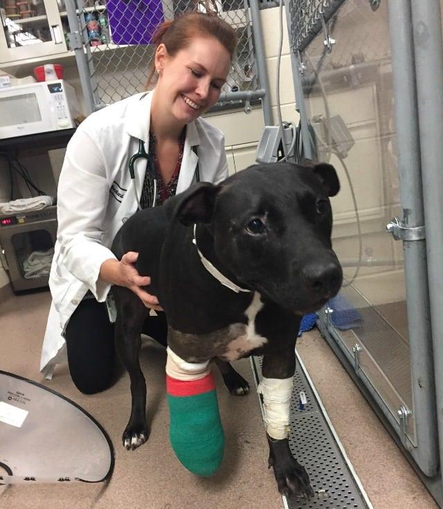 Tuffy the Tripawd Rescue Dog