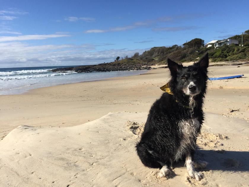 Australia amputee dog