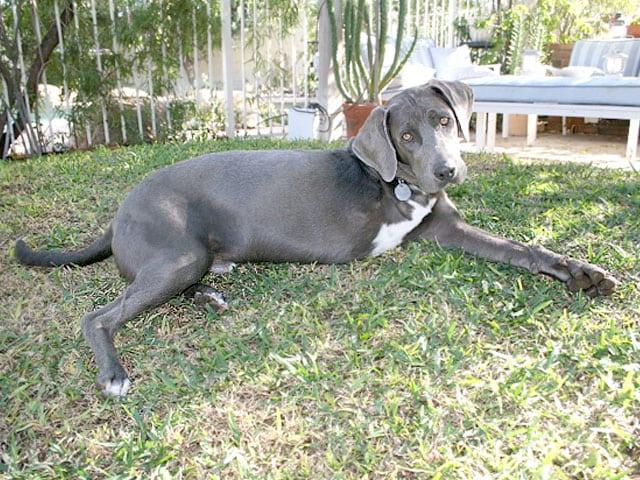 Three Legged Rescue Dog Coalie