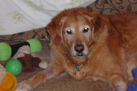 Tripod Dog Bailey from Virginia
