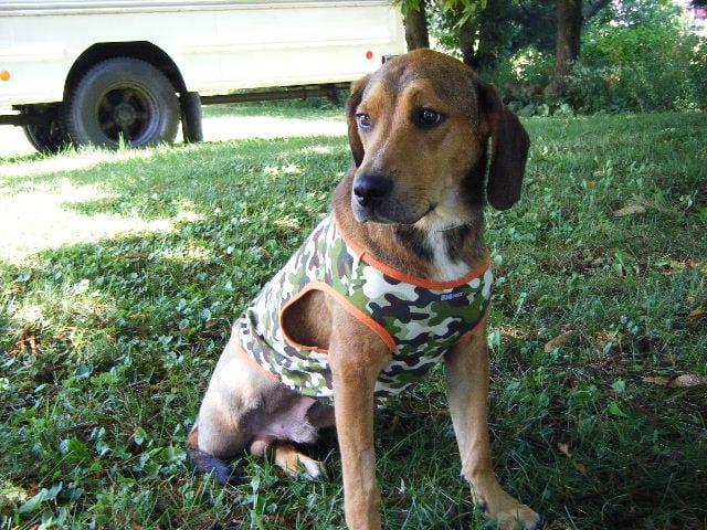 Ohio Tripod Toby for adoption