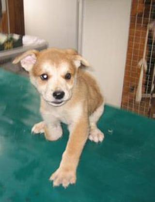 Ku-Wan saved from Korean dog (meat) farm
