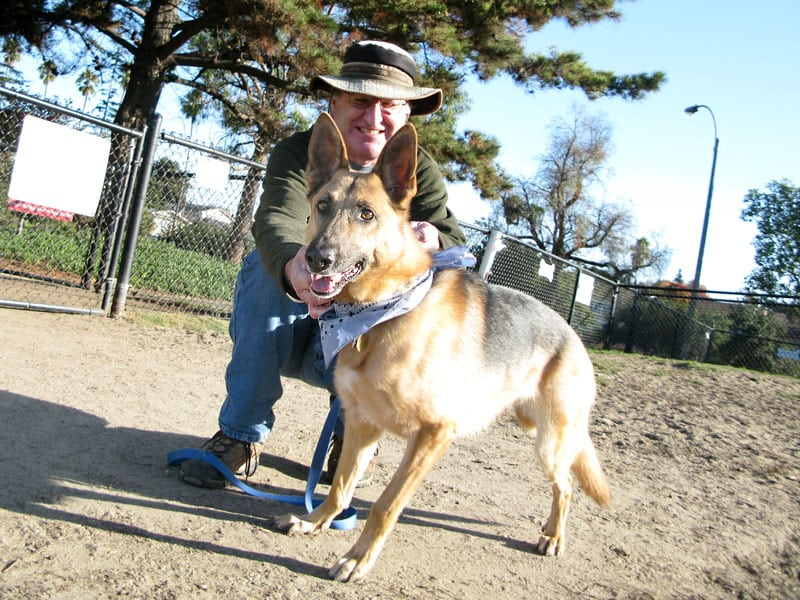 Three Legged German Shepherd Rescue Dog Codie Rae