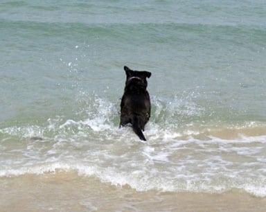 Israeli Tripod Dog Lalla