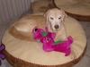 Tripod Zeus Loves Barney