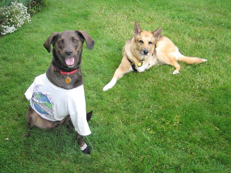 Morris, Team Tripawds, canine cancer, fundraising
