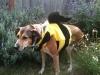 Queen Bee Chloe
