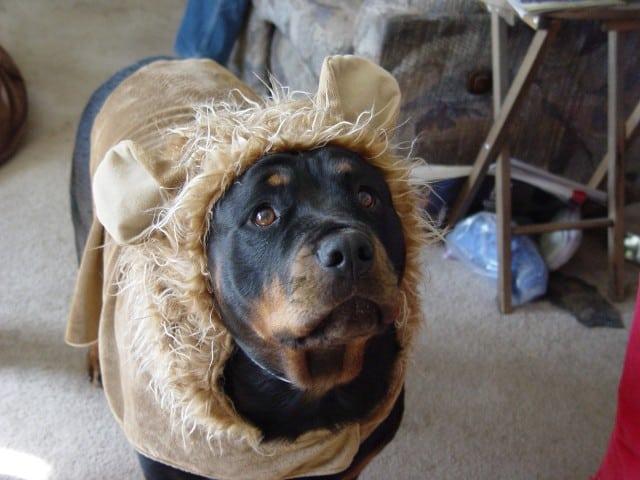 Sassy Sugar Bear
